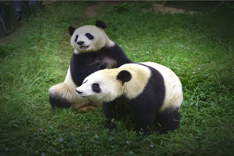 貴州森林野生動物園4