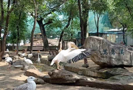 Ha'erbin Niaoyulin Zoo