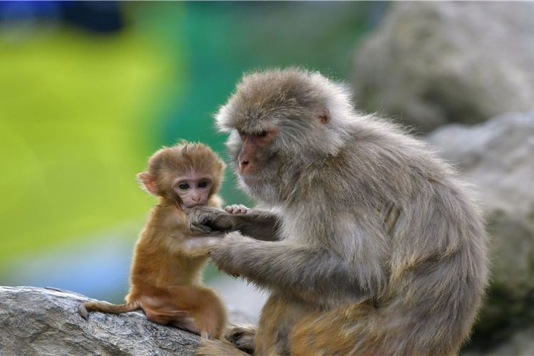 貴州森林野生動物園1