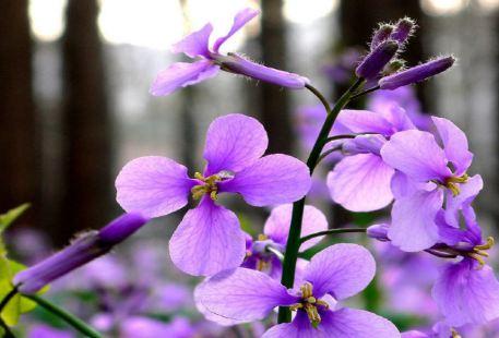 Zihai Fangting Lavender Manor