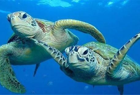 Nantong Ocean World