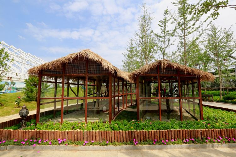 南宮五洲植物樂園4