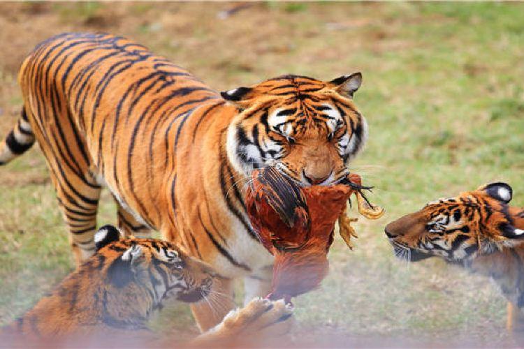 Meihua Mountain (China Tiger Park)3