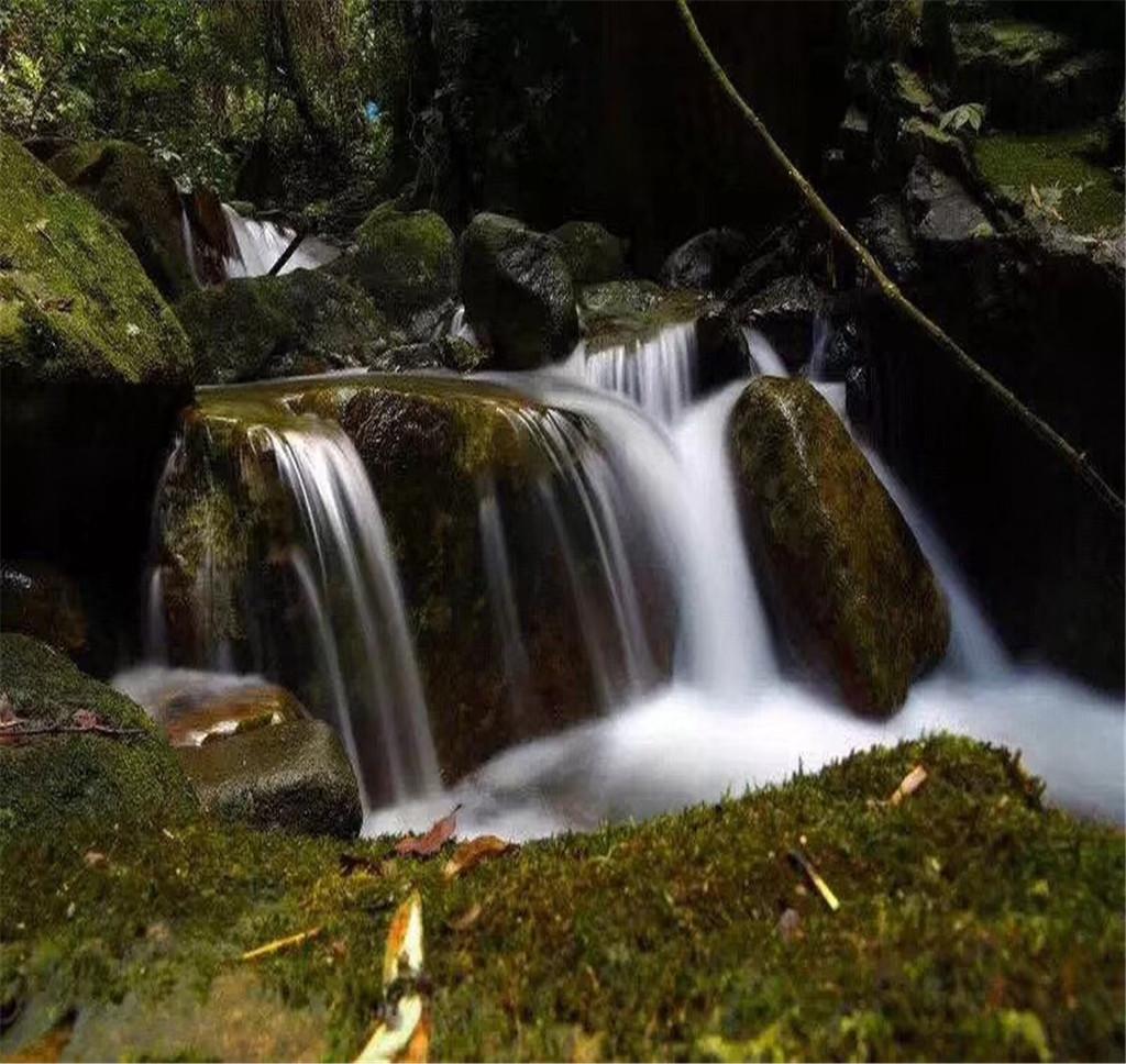 安溪桫欏谷風景區