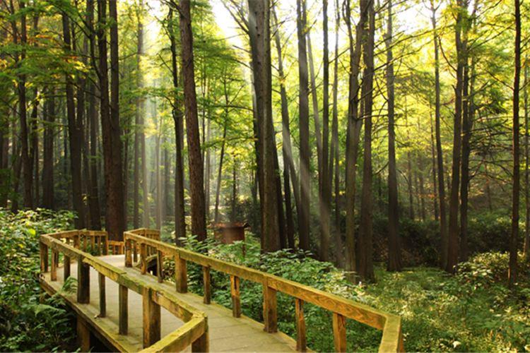 보얼덩산림공원4