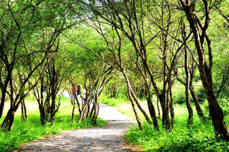 Huzhu Beishan National Geopark4