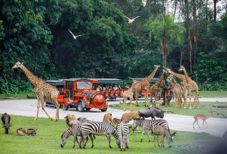 Chimelong Safari Park