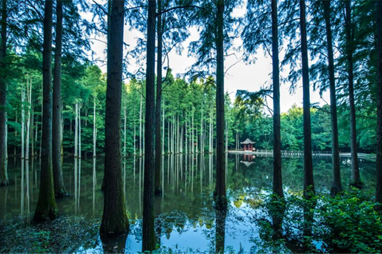 波爾登森林公園1