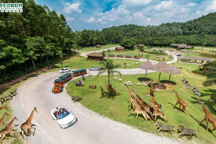 Chimelong Safari Park3
