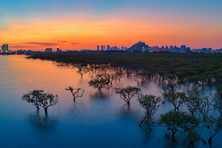 北海金海灣紅樹林生態旅遊區1