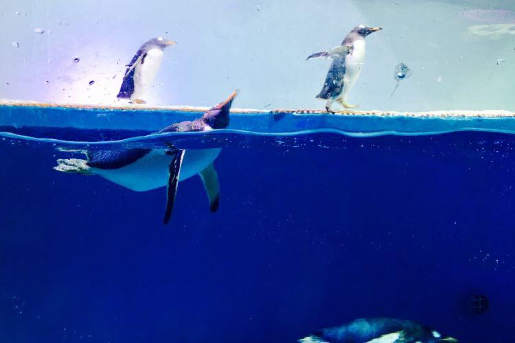 Grandview Aquarium1