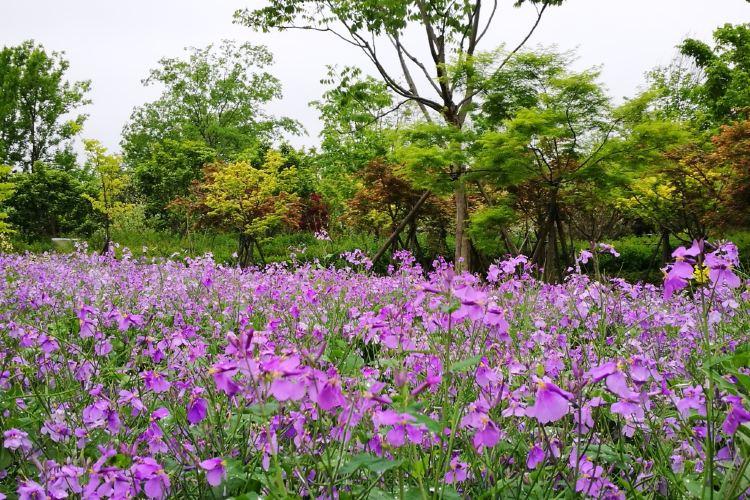 닝보 식물원3