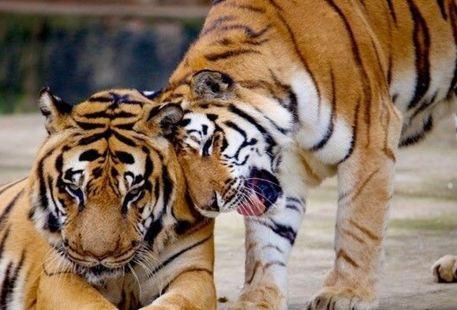 Three Gorges Forest Wild Animal World