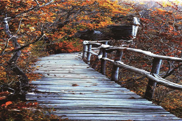 國家吊水壺森林公園2