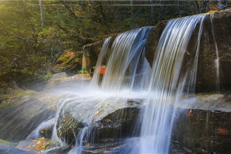 Qingheyuanshi Forest Park