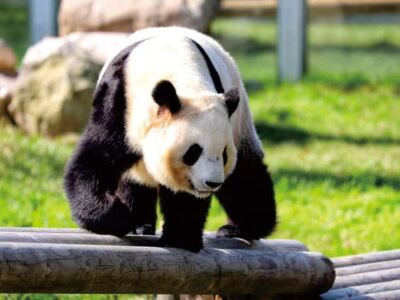 秦嶺野生動物園