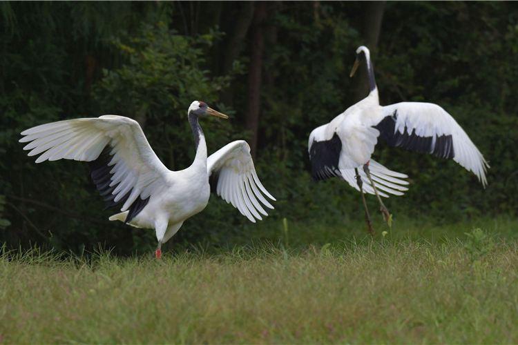 貴州森林野生動物園2