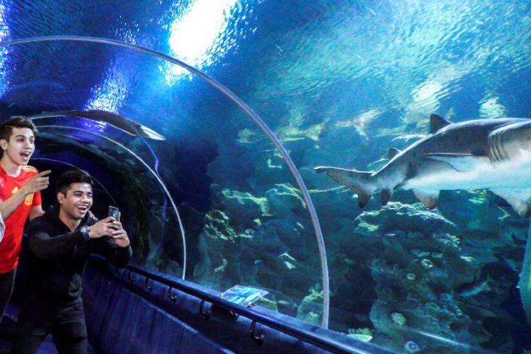 吉隆坡城中城水族館4