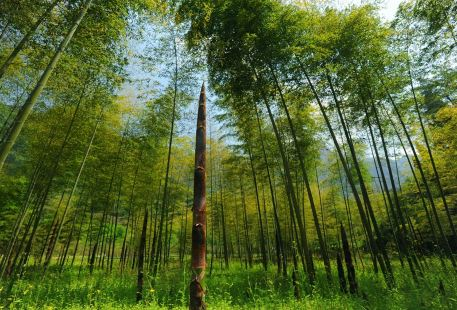 Three Gorges Bamboo Sea