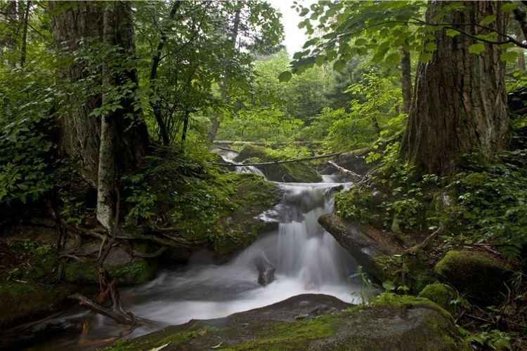 Qingheyuanshi Forest Park1