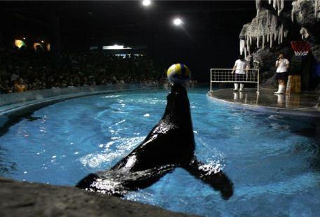 海獅歡樂秀表演