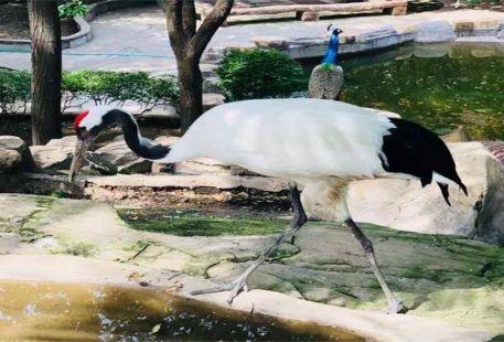 Xingqinggong· Zoo