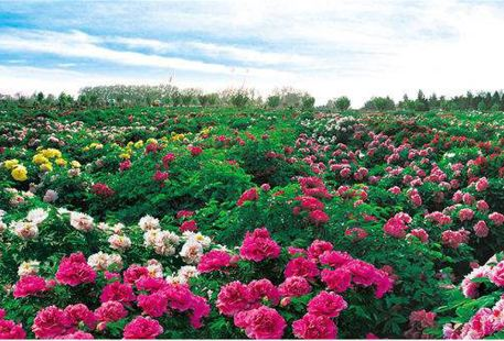 Caozhou Bai Garden