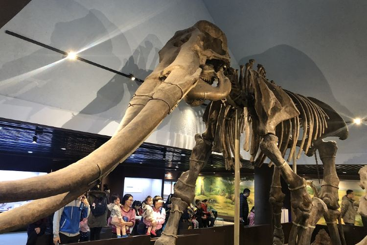 The Paleozoological Museum of China3