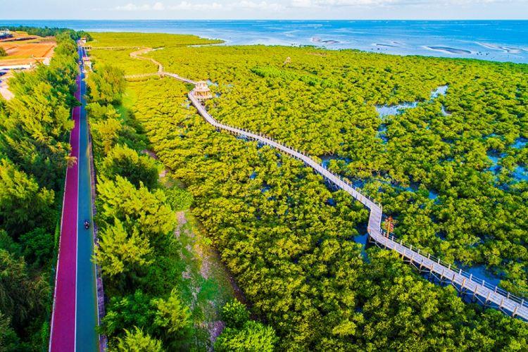 北海金海灣紅樹林生態旅遊區4