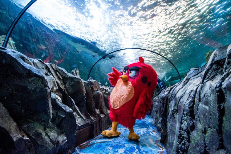 Sea Life Sydney Aquarium4