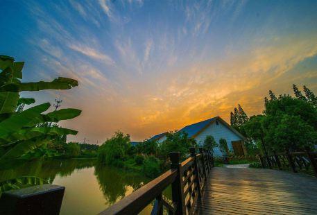 蒋巷村生態園