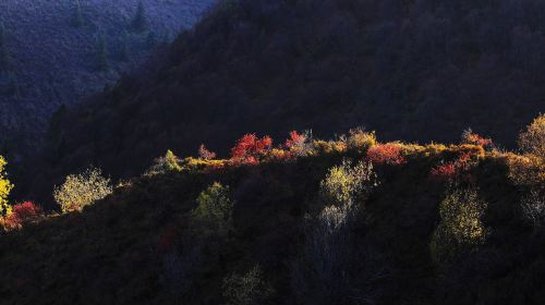 Xianmi National Forest Park