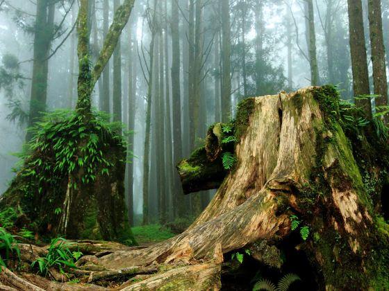 Alishan Scenic Area