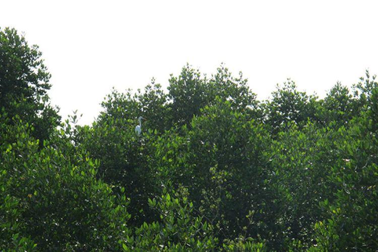 亞庇市濕地中心1