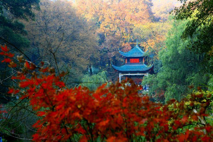Autumn-Admiring Pavilion4