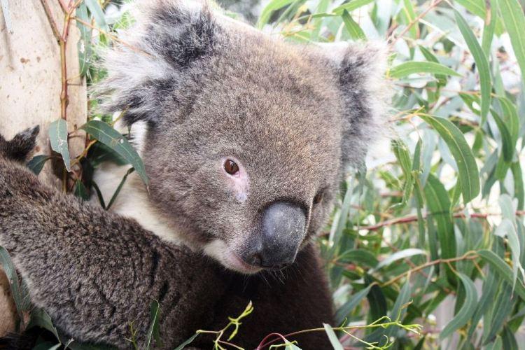 Maru Koala and Animal Park2