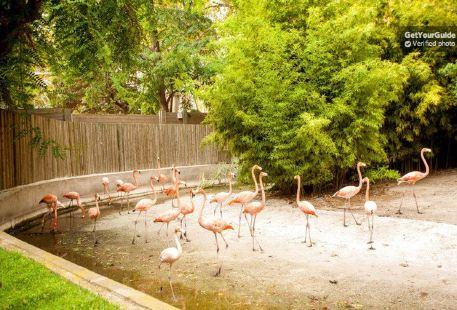 巴塞羅那動物園