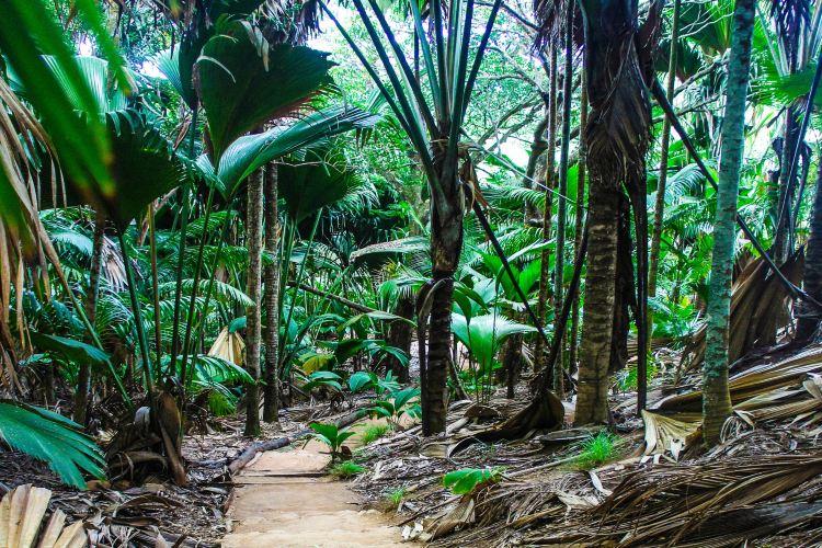 Vallee de Mai Nature Reserve1