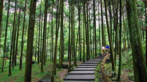 Dalongqiu Scenic Area