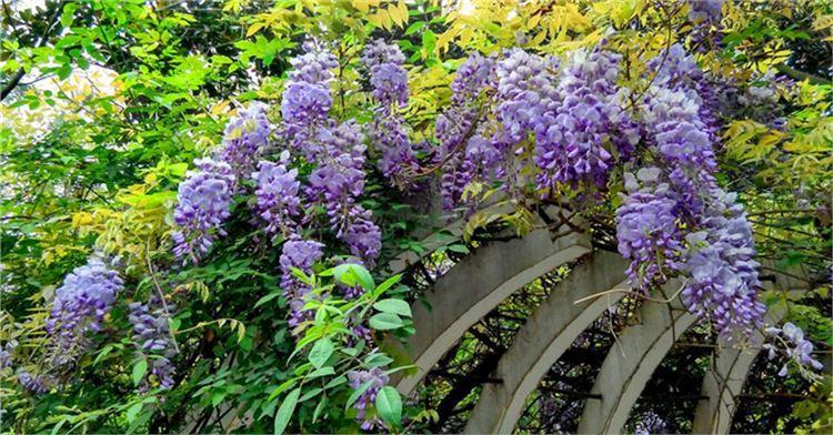 청두 식물원1
