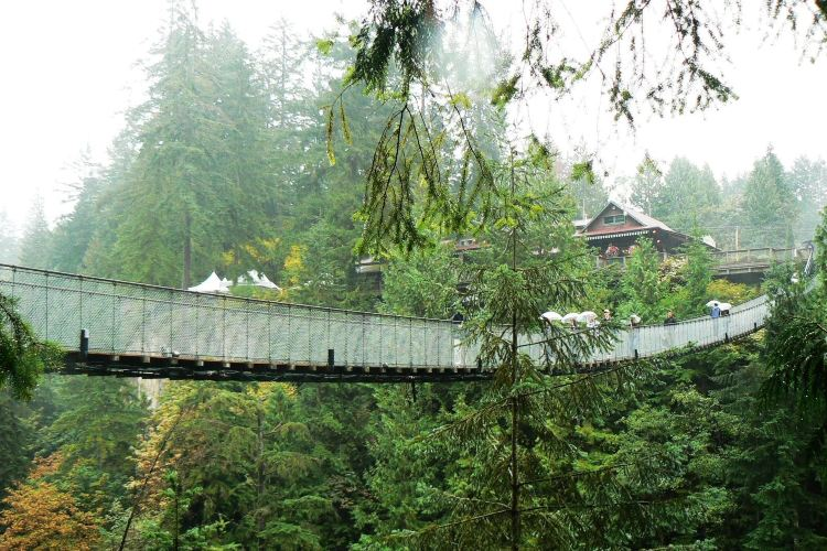 Capilano Suspension Bridge Park4