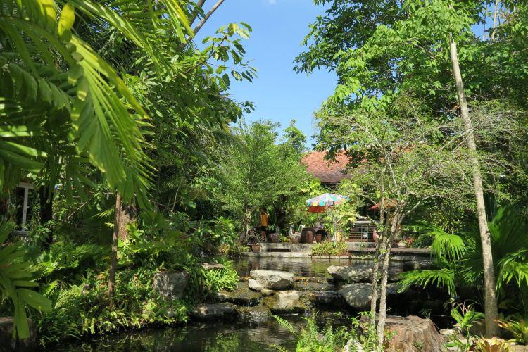 普吉島植物園1