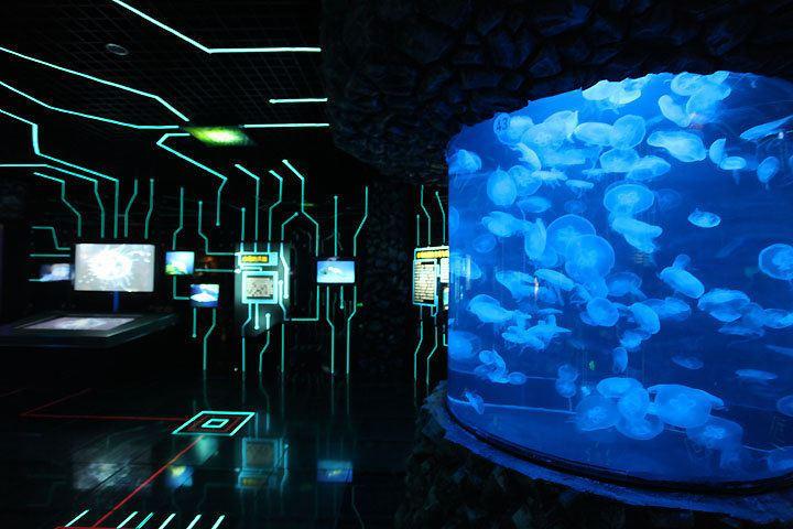 北京海洋館3