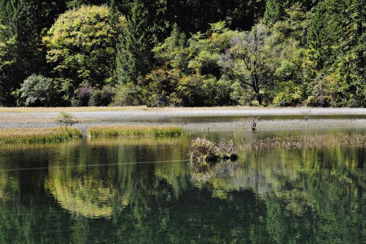 Arrow Bamboo Lake4