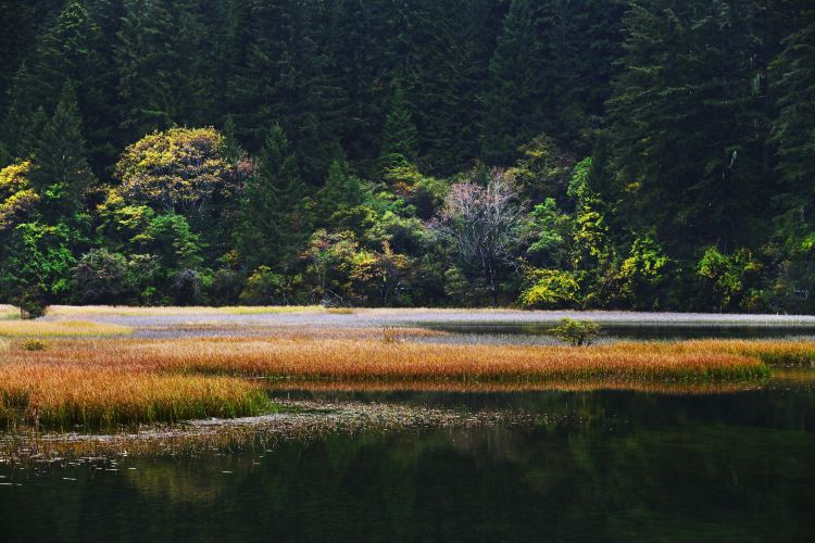 Arrow Bamboo Lake1