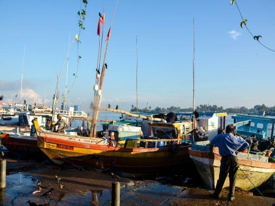 Negombo Central Fish Market