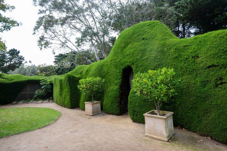 Ashcombe Maze & Lavender Gardens1