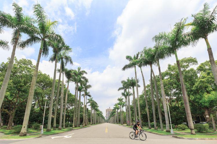 台灣大學1