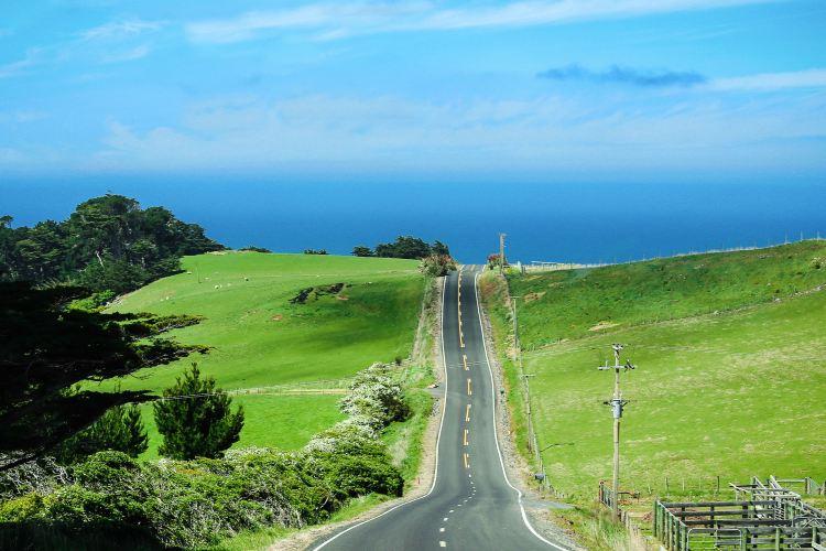 Otago Peninsula1