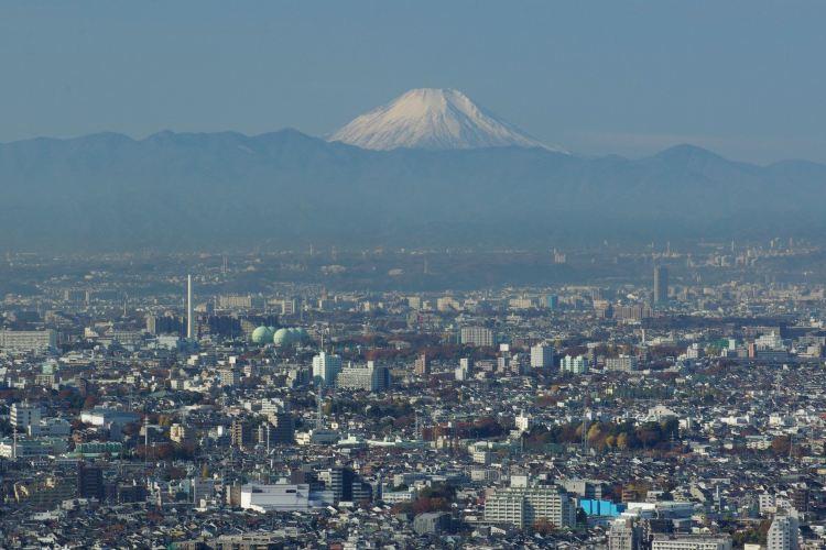 東京都廳觀景台1